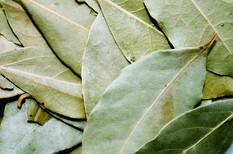 bay-leaf-1049543_640.jpg