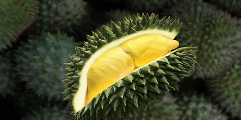 durian-tropical-fruit.jpg