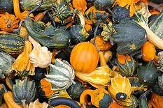 pumpkins-228474_640.jpg