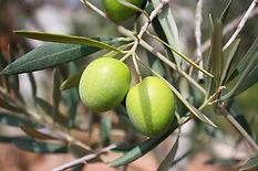 olives-473793_640.jpg
