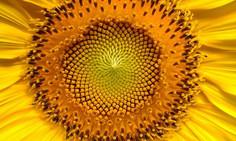 flower-94187_640.jpg