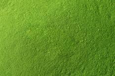 shredded-spirulina-chlorella-texture.jpg