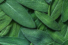 close-up-herb-sage-leaf-abstract-texture