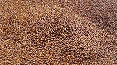 quinoa-2337621_640.jpg