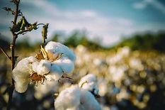 cotton-2807360_640.jpg
