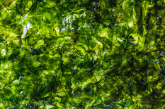 close-up-seaweed-texture.jpg