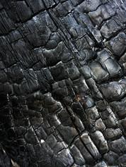 pexels-tomas-hakl-5478170.jpg