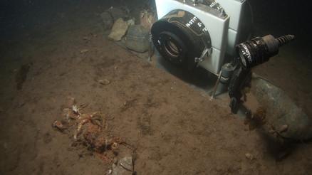 Crab decomposition