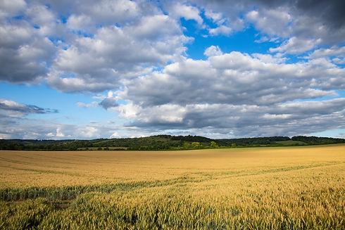 watlington_countryside_6_original.jpg