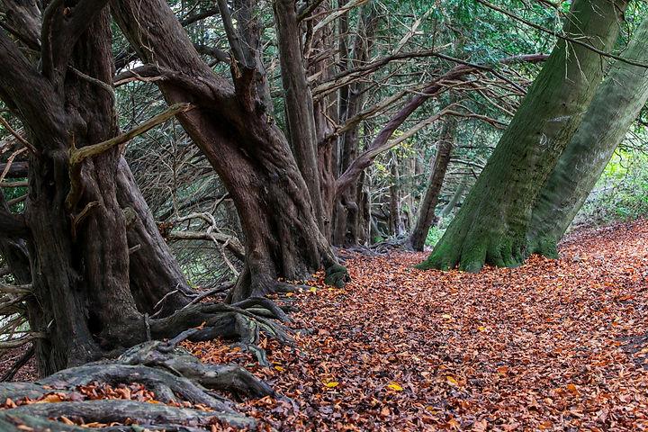 tree_people_original_edited.jpg