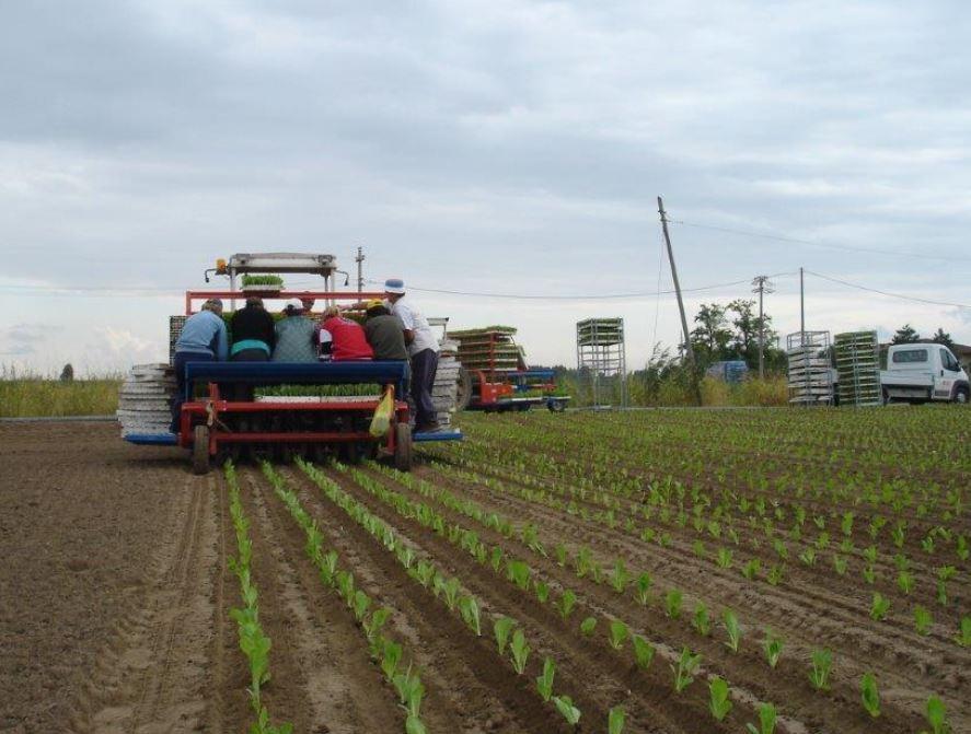 FX Evolution S Transplanter Farming