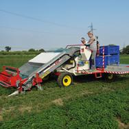 Harvester-loader for vegetables FR 60