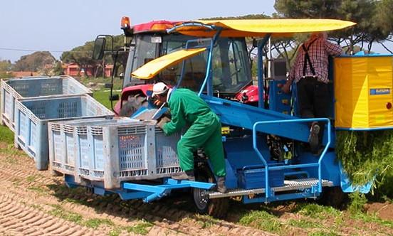 Harvester Misellaneus California