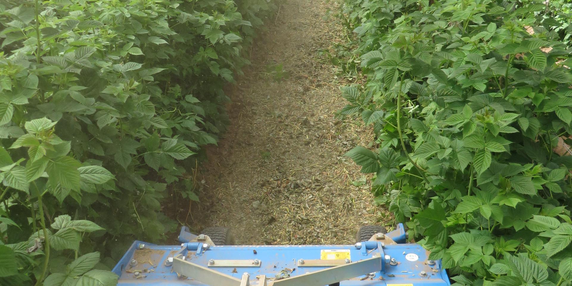 Shredder TRP Farming