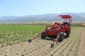 Automatic Weeder
