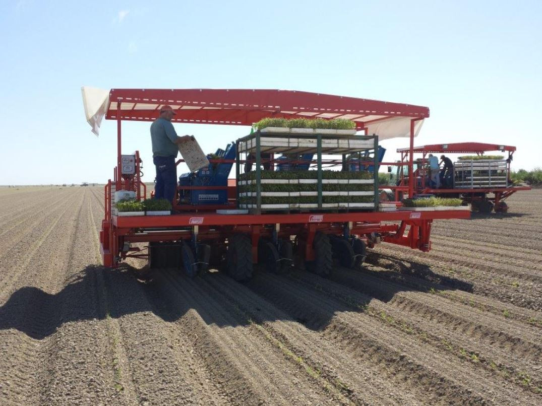 Futura Automatic Transplanter Farming