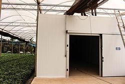 TOP_COOLER_-_Câmara_de_Germinação_de_Sementes de Palmeiras, germinação de sementes em camaras, camara aquecida para germinação de sementes, camara estufa para germinação de sementes, camara fria para sementes com controle de umidade e temperatura.
