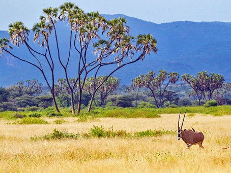 Best Game Reserves in Africa that are Worth-Visiting