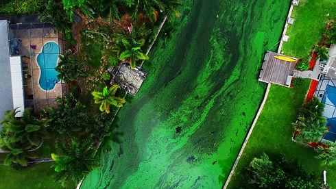636671400570230858-Algae-Bloom.jpg