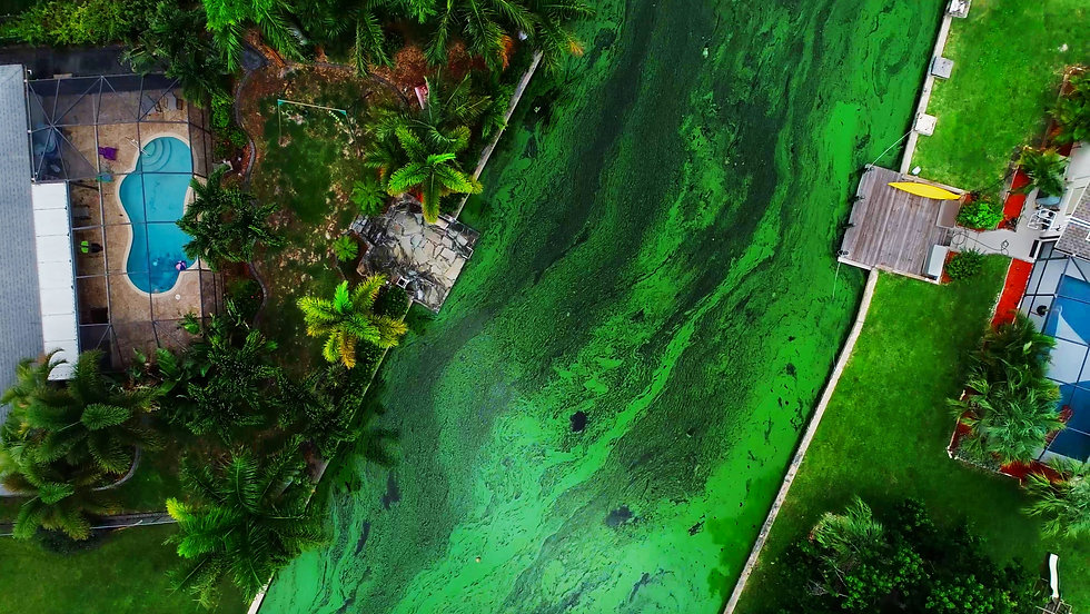 636671400570230858-Algae-Bloom.jpg