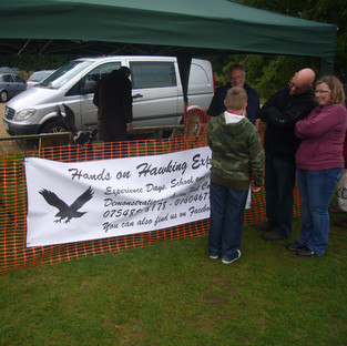 Owls and Falcon Display