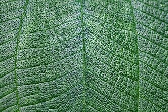 ayurveda consultation leaf