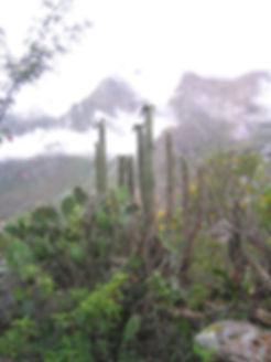 1024px-Echinopsis-pachanoi-peru.jpg