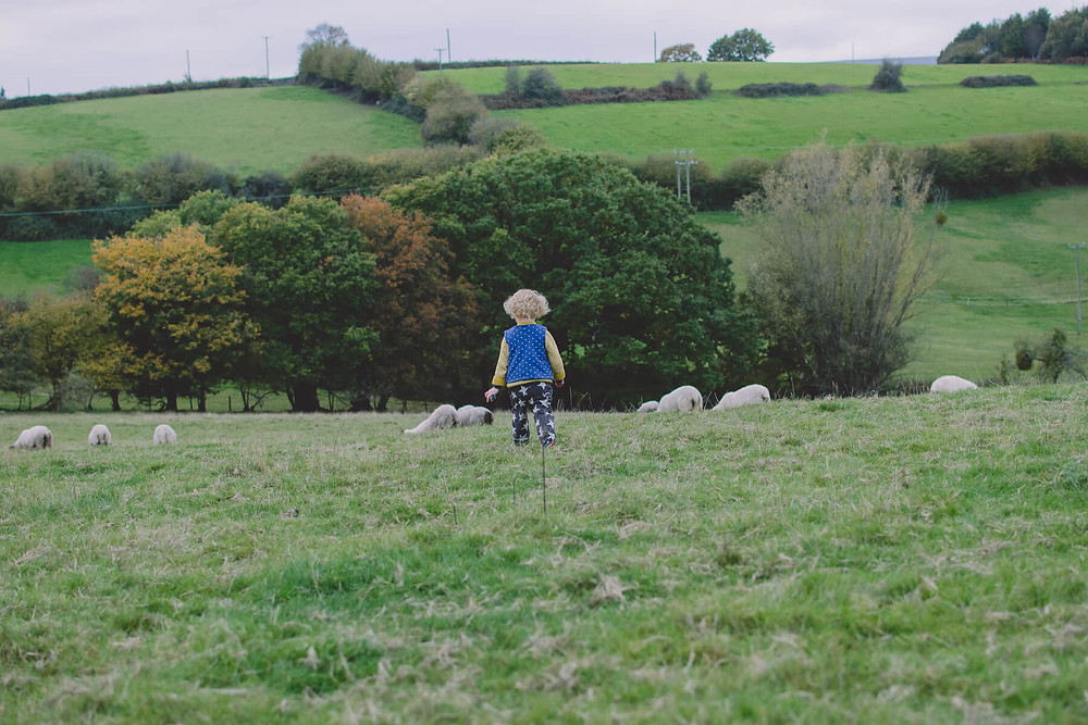 young girl in field with sheep