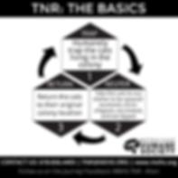 tnr-the-basics-1_orig.png