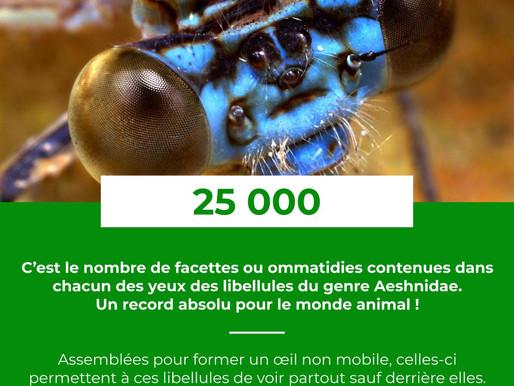 Le Saviez-Vous ? #12