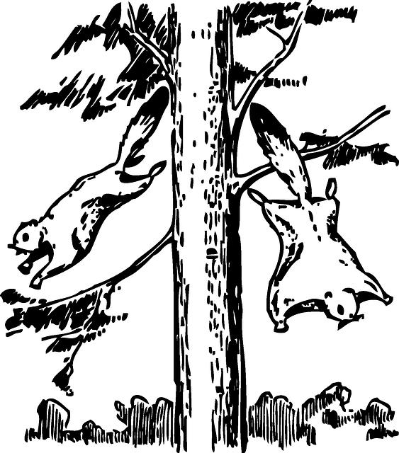 L'écureuil volant - biomimétisme - Bioxegy