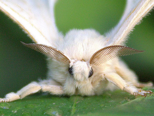 Capteur biomimétique : top 5
