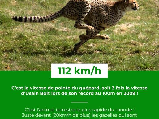 Le Saviez-Vous ? #24