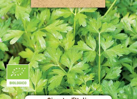 ORGANIC Giant Parsley of Italy