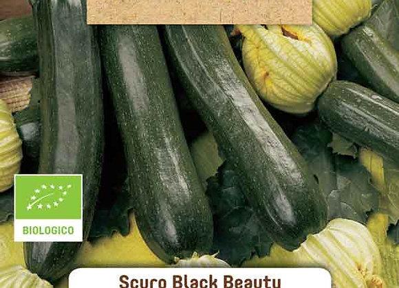 ORGANIC  Black Beauty Zucchini
