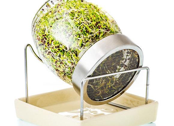 GEO Sprouting Jar