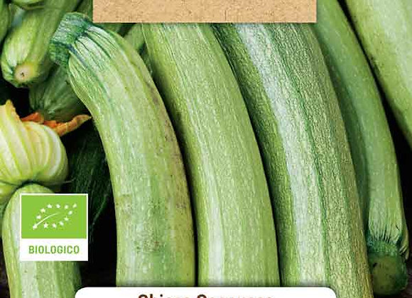 ORGANIC Genoese light courgette