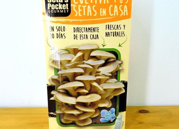 Mushrooms Box