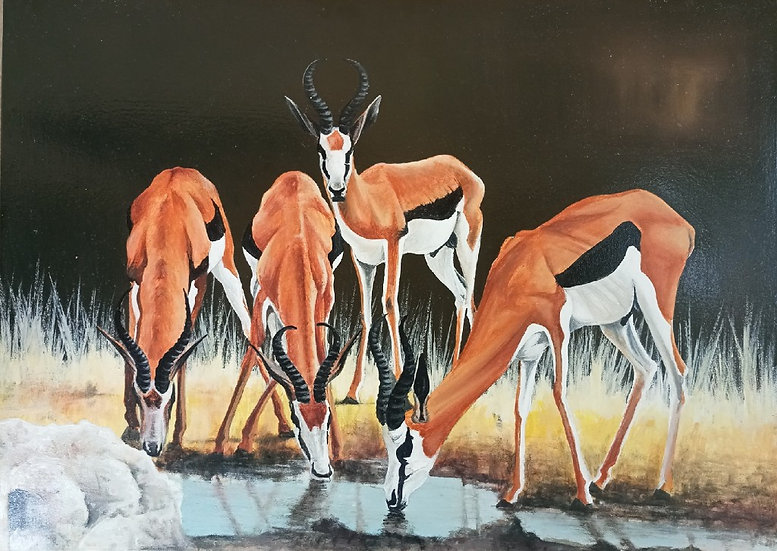 The Sprinboks (antelopes)