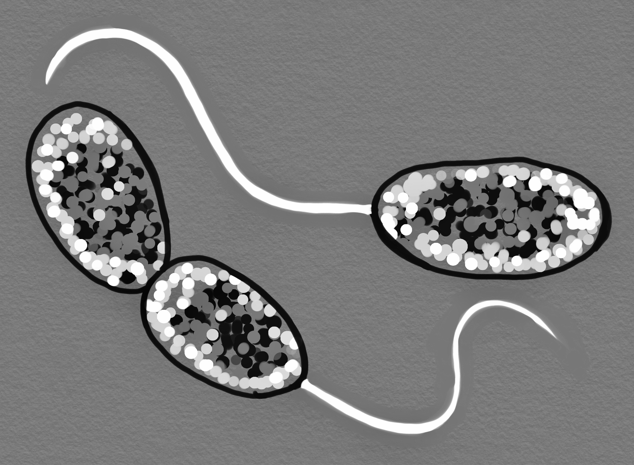 Nitrifying Bacteria