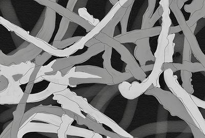 Phanerochaete chrysosporium