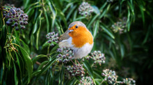 Aye up Fred: a heartwarming customer story of a woodland & a robin...