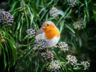 Aye up Fred: a heartwarming customer story of a woodland & a robin...