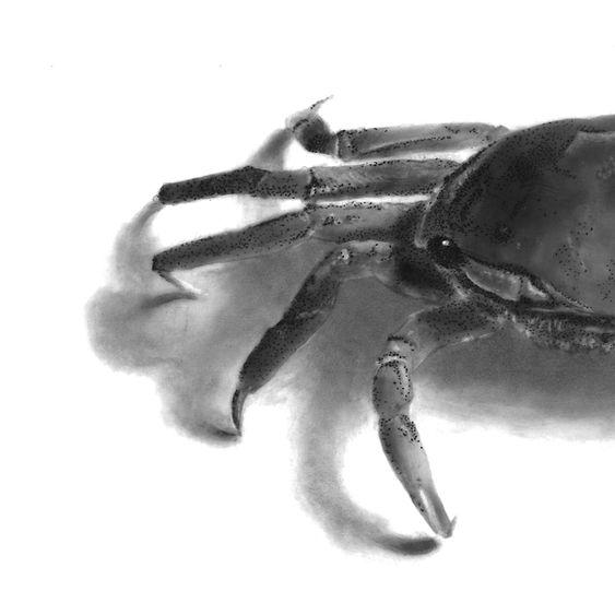 crabcut.jpg