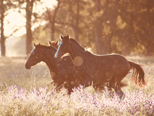 Leave her Wild: Observations of a Wild Mustang Heart