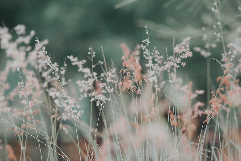 flora-flowers-grass-nature-268261.jpg