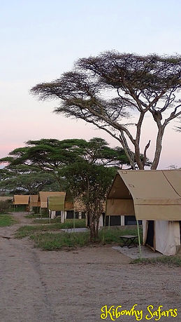 Tented Camps.