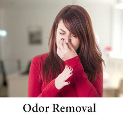 carpet odour removal.jpg