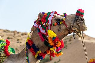 Jodhpur to Jaisalmer.jpg