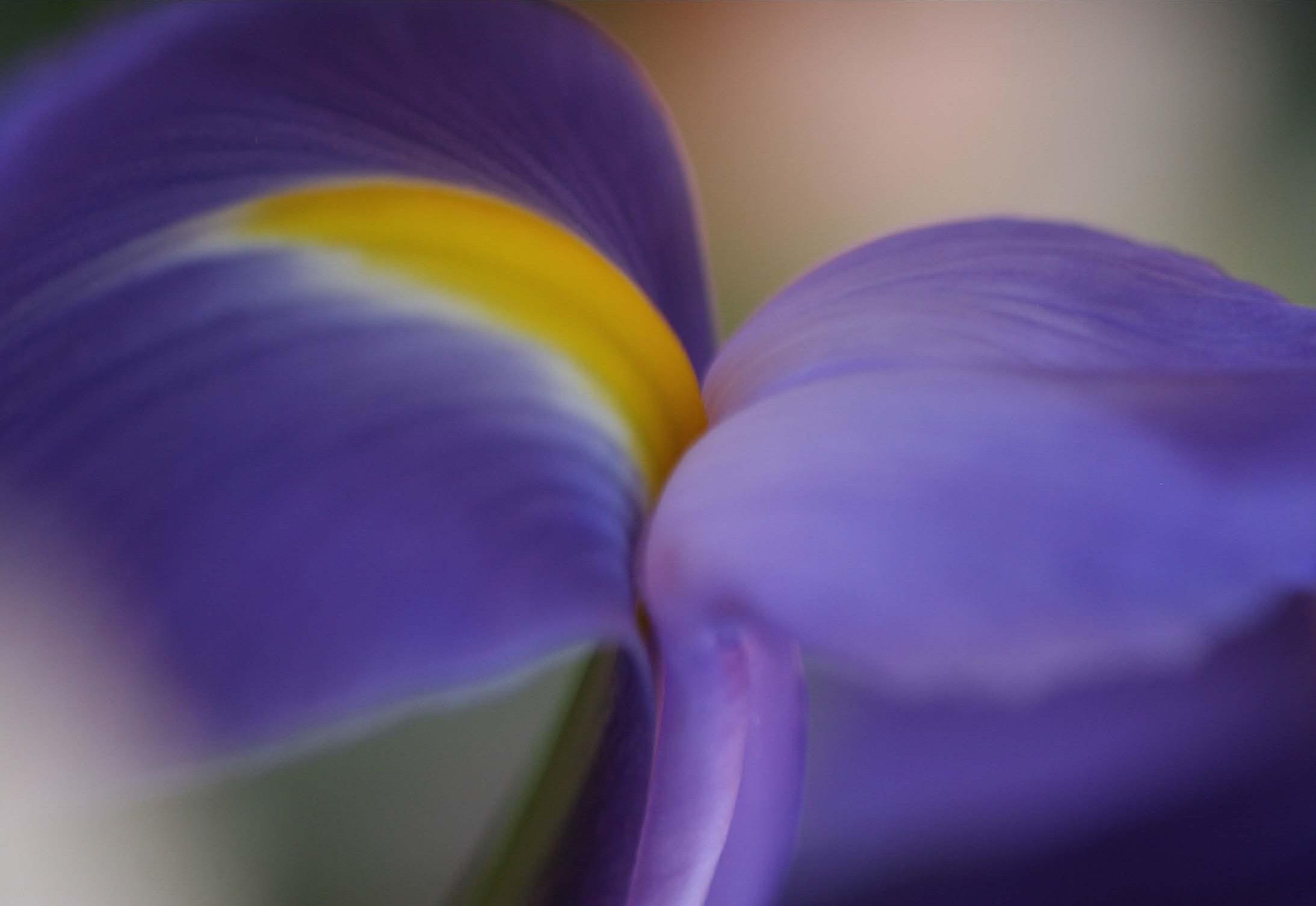CARD+Iris